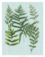 Spa Ferns I Framed Print