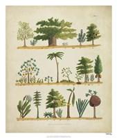 Arbor Sampler I Fine Art Print