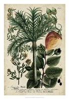 Vintage Tropicals III Fine Art Print