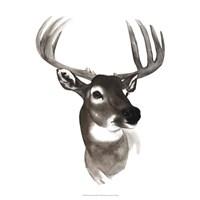 Western Animal Study VI Fine Art Print