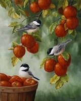 Apple Harvest Chickadees Fine Art Print