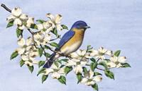Carolina Blue Fine Art Print
