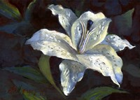 White Lily Fine Art Print