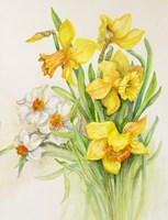 Daffodils- Springs Calling Card Fine Art Print