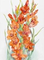 Hot Orange Gladiolus Fine Art Print