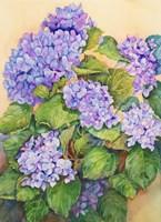 Easter Hydrangea Fine Art Print