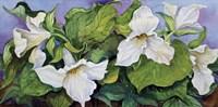 Woodland Trillium B Fine Art Print