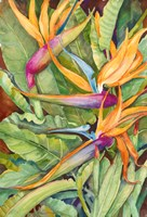 Birds Of Paradise Fine Art Print