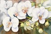 Stem Of Orchids Fine Art Print