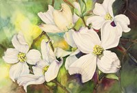 White Dogwood Fine Art Print