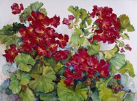 Deep Red Geraniums Fine Art Print