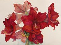 Holiday Amaryllis Fine Art Print