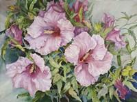 Pink Hibiscus Fine Art Print