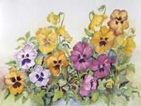 Amber Pansies Fine Art Print