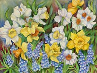 Daffodils And Grape Hyacinths Fine Art Print