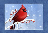 Snow Berries Fine Art Print