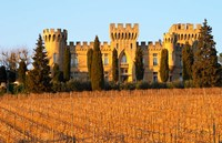 Vineyard with Syrah Vines and Chateau des Fines Roches Fine Art Print