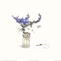 Petunias & Blue Salvia Fine Art Print