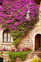 Flowering Vines, Historic Eze Fine Art Print