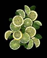 Lemons, Limes & Mint Fine Art Print