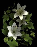 White Lilies '06 Fine Art Print