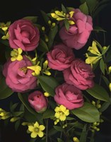 Camellia 2 Fine Art Print