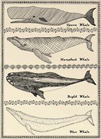 Scrimshaw Whale Fine Art Print