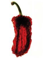 Pepper Silhouette Fine Art Print