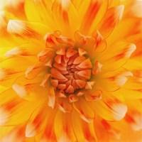 Orange Glow Fine Art Print