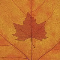 Maple Fine Art Print
