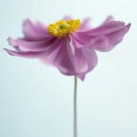 Lilac Petals I Framed Print