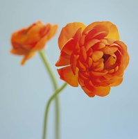 Orange Delight I Fine Art Print