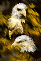Eagle Three Fine Art Print