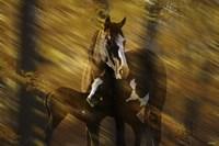 Wild Horses in the Badlands I Fine Art Print