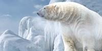Arctic Frost Bear Fine Art Print