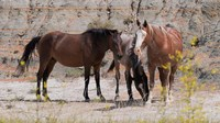 Three Horses Mingling Fine Art Print