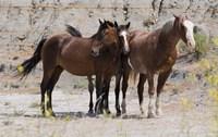 Three Brown Horses Fine Art Print