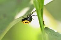 Yellow And Black Ladybug Fine Art Print