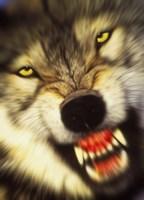Wolf Motion Fine Art Print