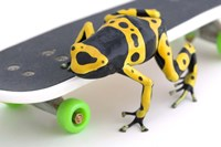 Yellow-banded Frog On Skateboard Fine Art Print