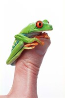 Green Frog On Thumb Fine Art Print