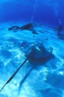 StingRay Blue Sea Dive I Framed Print