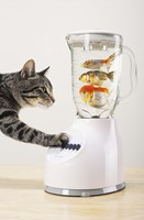 Cat's Fish Shake Fine Art Print
