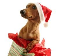 Santa's Puppy Gift Fine Art Print