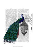 Peacock On Lamp Framed Print