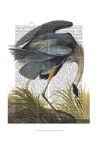 Blue Heron 1 Framed Print