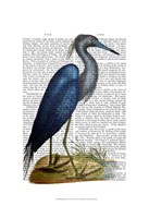 Blue Heron 2 Framed Print