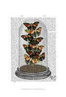Multicoloured Butterflies in Bell Jar Framed Print