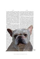 White French Bulldog Plain Framed Print