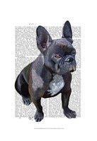 French Bulldog Plain Framed Print